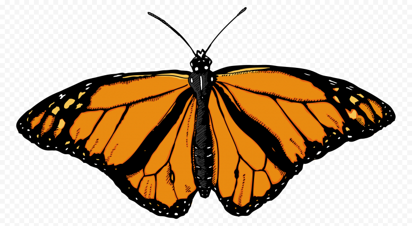 butterfly png cut file