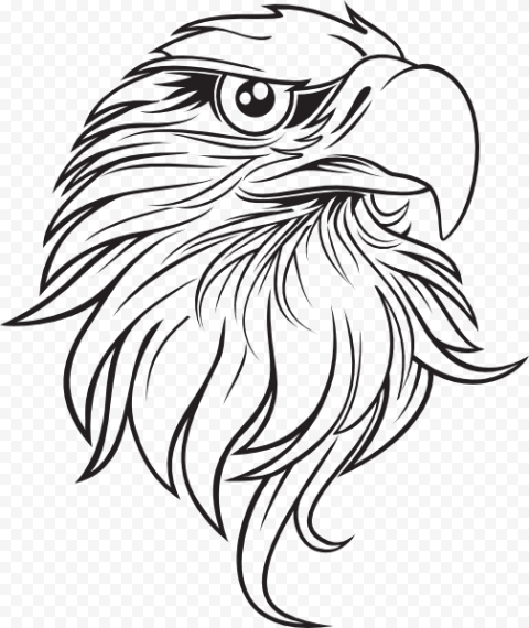 Bald Eagle Drawing, Eagle Outline s, pencil, monochrome, vertebrate
