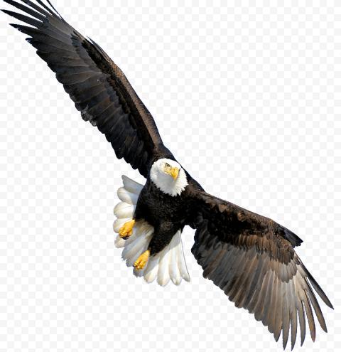 bald eagle, Bald Eagle Throw pillow Beak CafePress, Bald Eagle, animals, biology, kitty