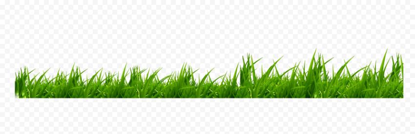 Green grass, Icon, grass, text, cartoon Grass, grass png
